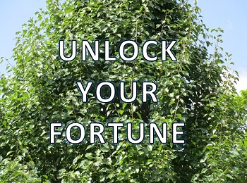 Unlock Your Fortune